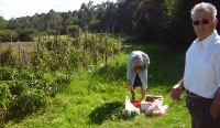 Huertas en los terrenos comunales de La Rasa