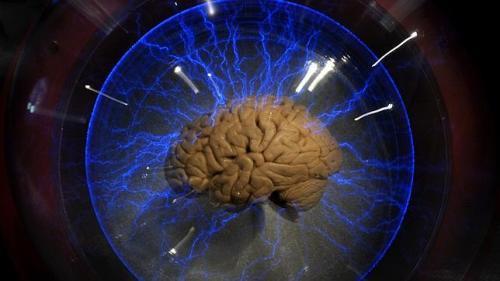 Un cerebro en una exposición / AFP
