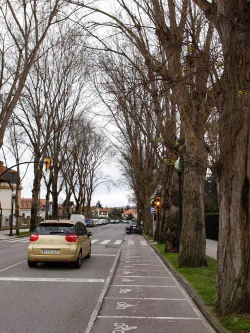 En la foto de Juan Plaza para La Nueva España puede verse la calle de Jesús Revuelta cuando aún estaban los chopos. Un día de invierno; los árboles seguían siendo bellos. En verano, la fronda y la umbría eran magníficas.