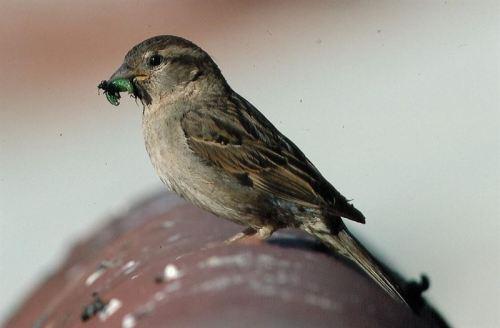 Foto: Tatavasco Images / SEO-Birdlife